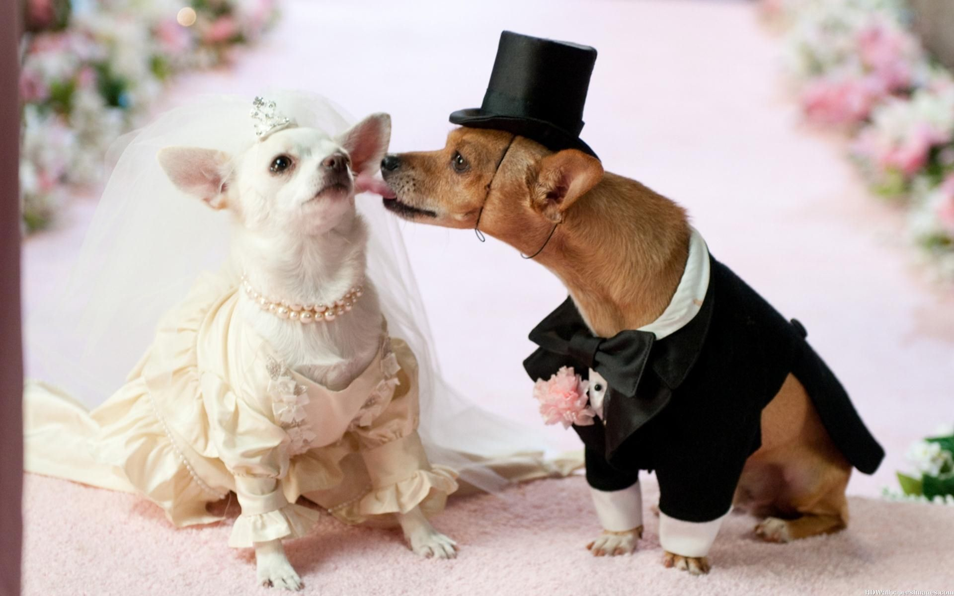 Cute-Dog-Wedding-And-Kissing-Images[1].jpg